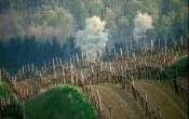 vineyard_picture_rudi_weiss